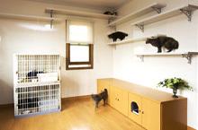 ペットと暮らしやすい家へ