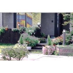 狭い庭でも緑がいっぱい
